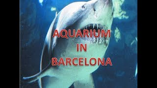 AQUARIUM IN BARCELONA WITH CLASSICAL MUSIC
