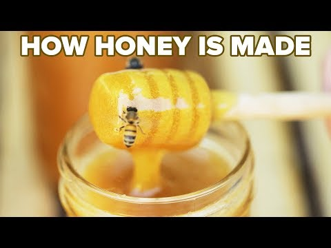 How Honey Is Made ? Tasty