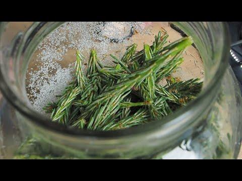 Jak zrobić syrop z sosny