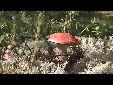 Новые правила сбора грибов и ягод обсуждают жители Коми