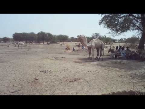 Water Scarcity in Kijigari