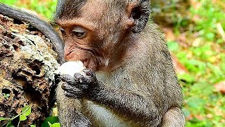 Pity Baby Lori can eat food alone | Baby Lori not care from mom Amari |