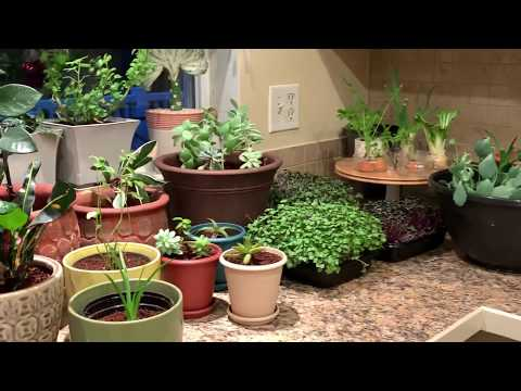 Houseplants I Transplanted Today