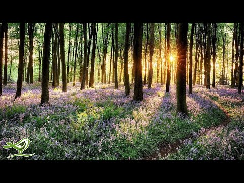 9 Hours of Relaxing Piano Music: Sleep Music, Study Music, Meditation Music, Relaxing Music ★97