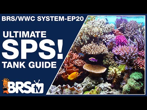 Ep20: The only SPS reef tank setup guide you'll ever need! - The BRS/WWC System