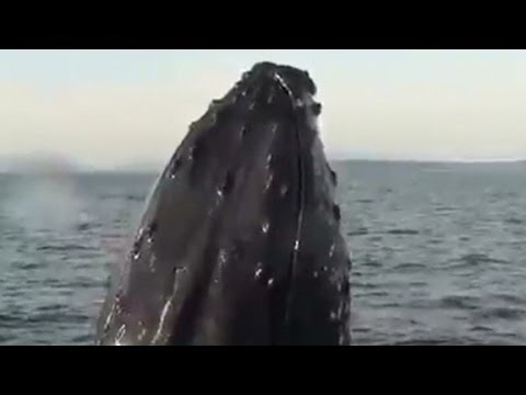 Sightseers Get Up Close And Personal With Humpback Whale - Smashpipe News Video