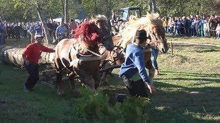 Concurs cu cai de tractiune la simplu si dublu - Cormaia, Bistrita-Nasaud 2018