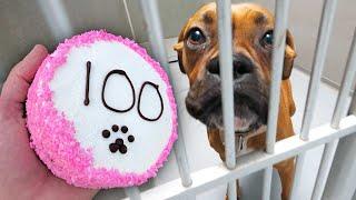 Baking 100 Dog Cakes For Homeless Dogs!
