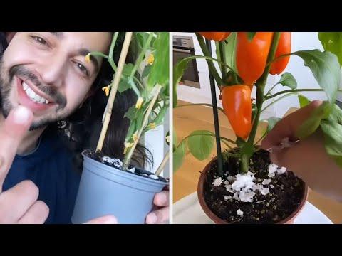 Лушпи од јајца како ѓубриво, цимет за здрави корени - одлични трикови и совети за растенијата во вашиот дом