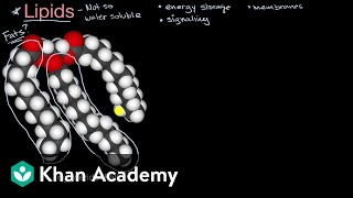 Introduction to lipids | Biology foundations | High school biology | Khan Academy