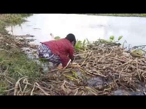 PANCING,MANCING BELUT DISAWAH MANTAP Phim Video Clip