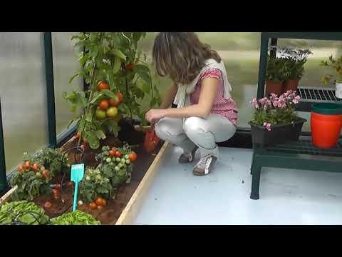 Greenhouses Hobby Gardener - Palram