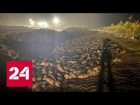 Мертвые норки восстали из-под земли и мстят датским политикам