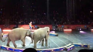 Ringling Bros and Barnum & Bailey Circus at Barclay Center