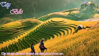 CẢNH ĐẸP VIỆT NAM - Tây bắc yêu thương - Ruộng bậc thang tuyệt đẹp