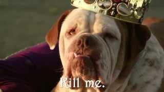 Ужасная правда про породы собак!
