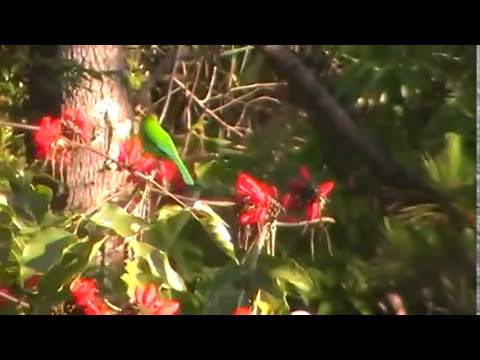 Birds of Doi Inthanon National Park Thailand part 1