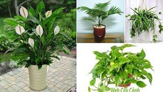 Tổng hợp cây cảnh trong nhà hút khí độc cực tốt