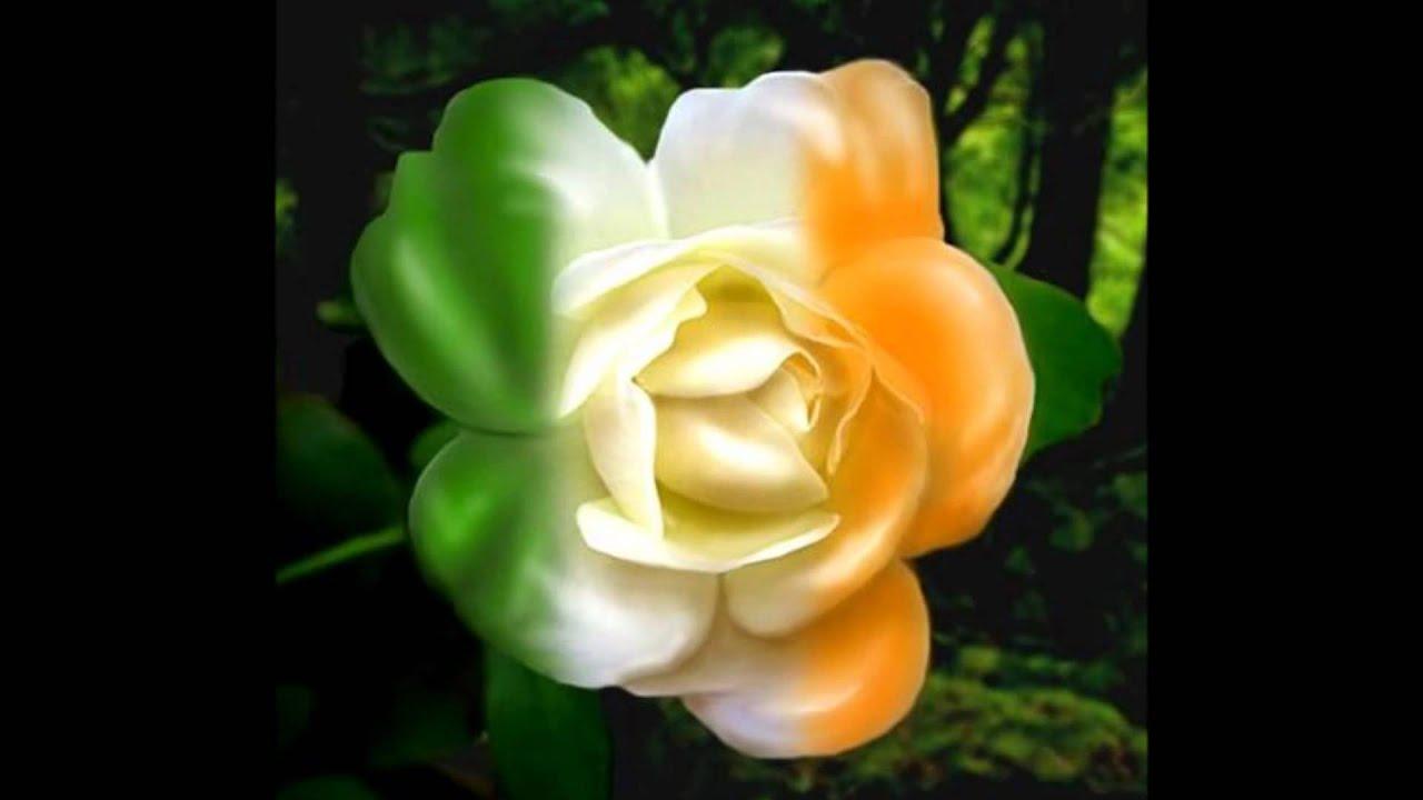 Hank Locklin My Wild Irish Rose Youtube
