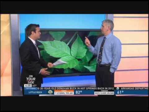 Dr. David Gerson Talks Poison Ivy
