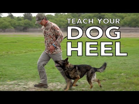 Teach Your Dog to HEEL Competition Style