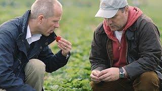 Woher kommen unsere Erdbeeren? - Schwartau