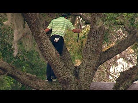 Top-10 tree encounters on the PGA TOUR