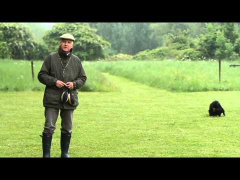 Shooting Times & Skinners: Gundog training part 3