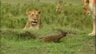 Amazing animals moments. Animals confrontation