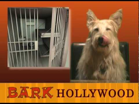 NBC GOES TO THE DOGS, TODD'S SWEET GIG & THE DAME!