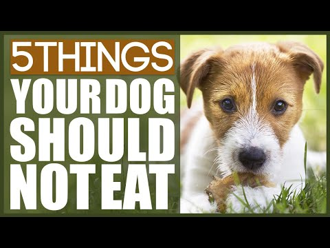 5 Things Your Dog SHOULD NOT EAT