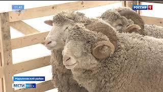 Вековой юбилей отмечает в этом году племзавод «Овцевод»