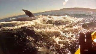 Kayakiste avec une baleine