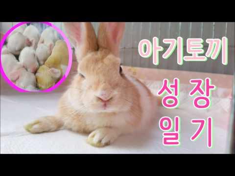 새끼토끼 * 아기토끼 성장일기 ! ♡ 아기토끼 자라는 모습 ?! ( babyrabbit . bunny )*( ウサギ )