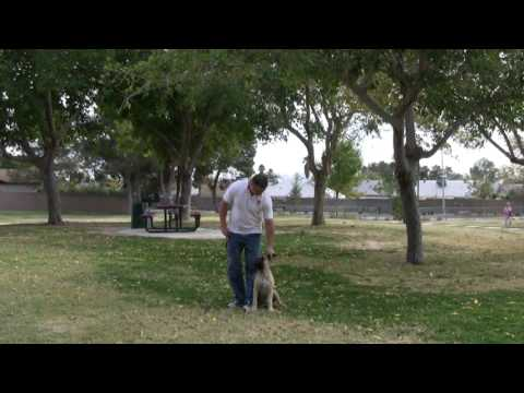Southern Nevada Dog Training in Las Vegas