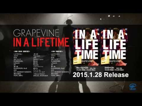 GRAPEVINE - 「IN A LIFETIME」 SPECIAL INTERVIEW 予告編