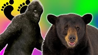 BIGFOOT CHALLENGES US!   Bear Simulator #9