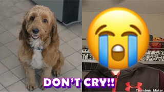 Reacting To The Try Not To Cry Challenge (YOU WILL CRY) 😭