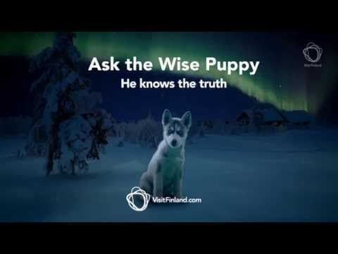 Ask the wise puppy - FINLAND
