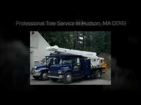 Tree Removal & Pruning in 01749