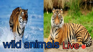 amazing wild animals Live. discovery channel