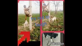 DOG ATTACK  MAN ! FUNNY DOGS  !  TRY NOT TO LAUGH  !  MAZAHIA VIDEO