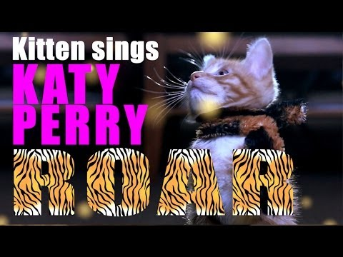 Baixar Katy Perry - Roar Parody - Kitty Purry - Meow