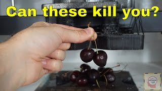 Can Eating Two Cherries Kill You? Crushing Cyanide Out of Cherries With a Hydraulic Press