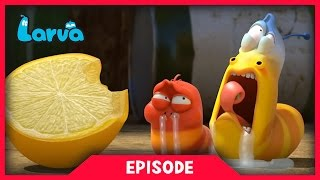 LARVA - LEMON | 2017 Cartoon Movie | Cartoons For Children | 라바 | LARVA Official