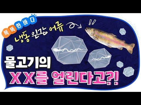 동결 보존 기술이 멸종위기 해양생물을 되살린다고?! [똑똑한 바다]