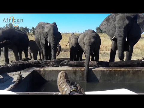 Close up with the Elephants at Somalisa Camp