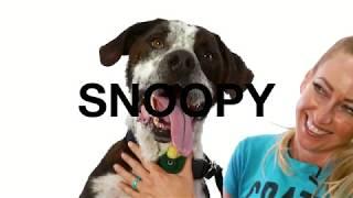 Adopt Snoopy at NKLA
