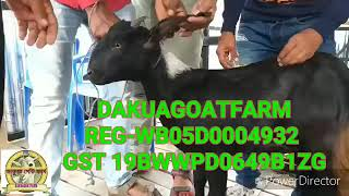 Goat farming training Videos - Playxem com