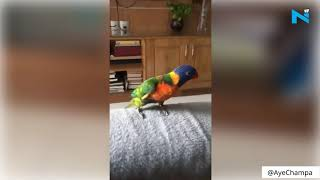 Parrot dancing on 'Aankh Marey' is the best thing on inter..
